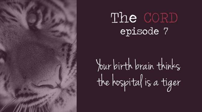 Your birth brain thinks the hospital is a tiger